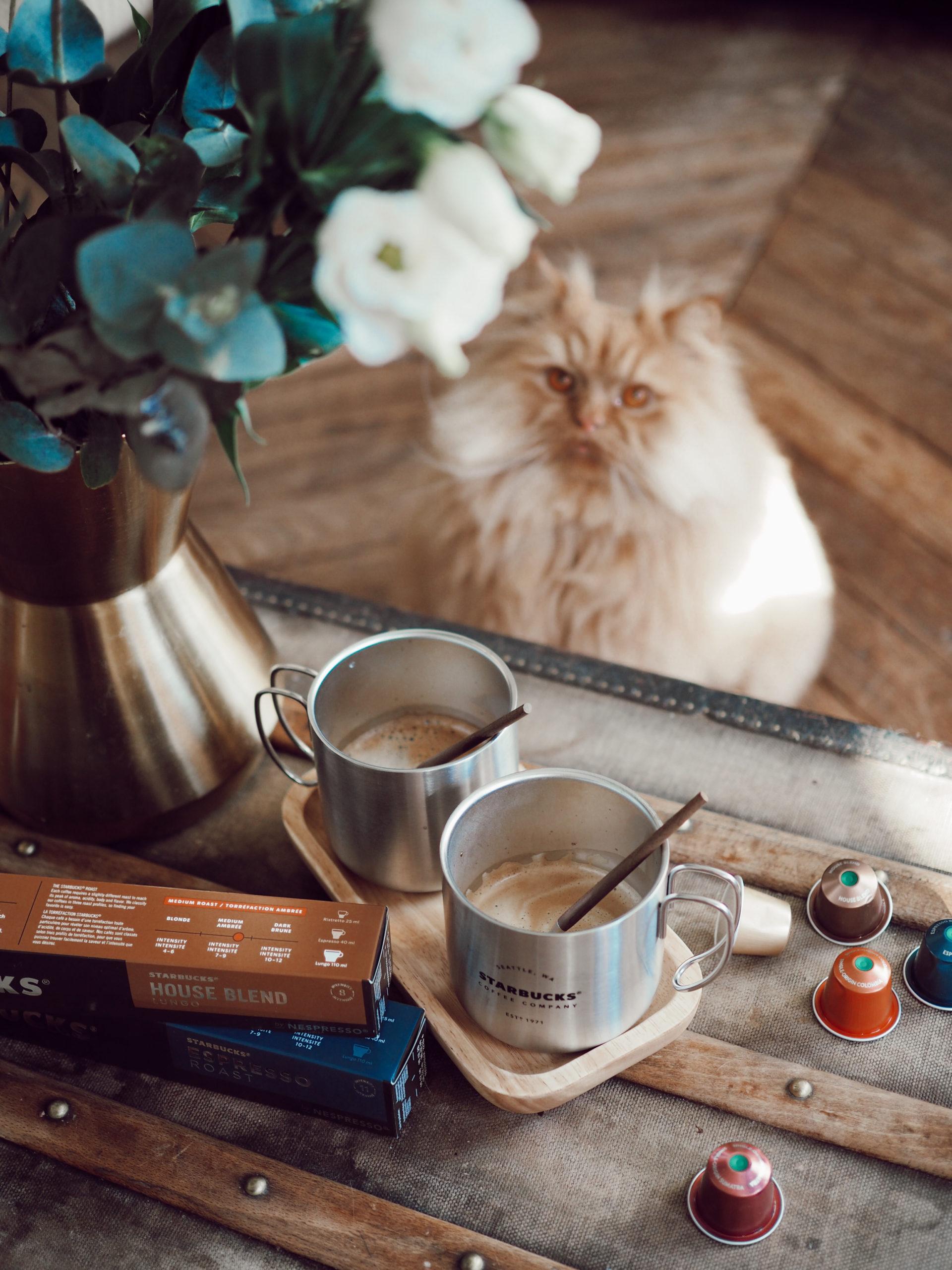 café chat home